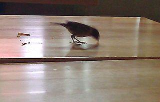 Bird_food