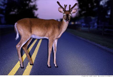 Deer_headlights