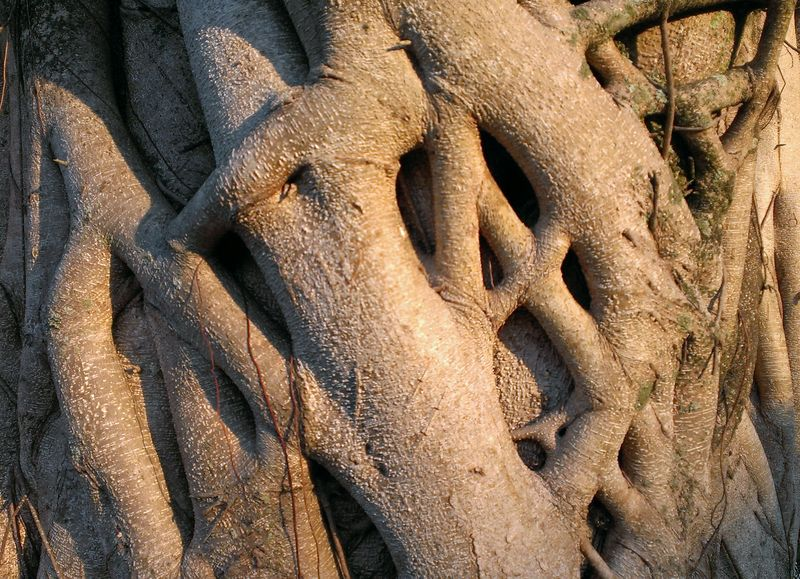 Tree closeup