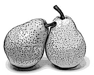 GK pears